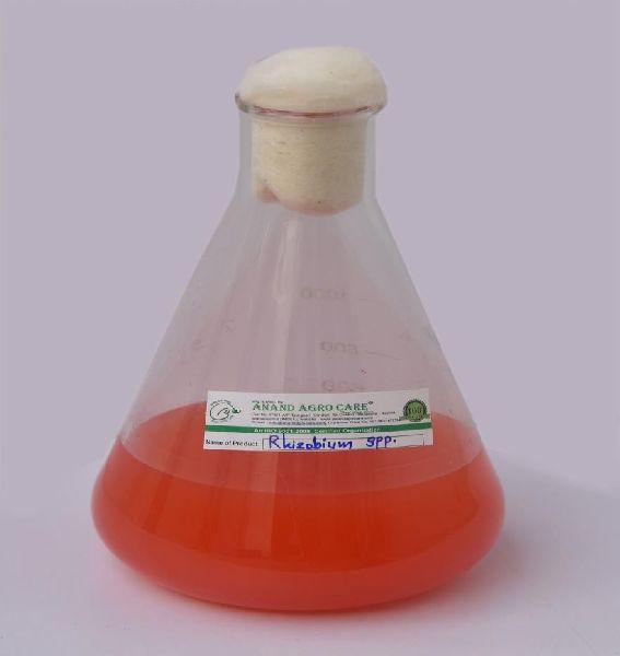Rhizobium spp (3101)