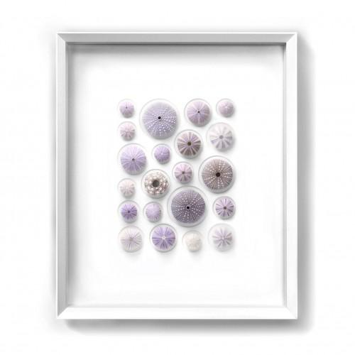 Lilac Urchin Mosaic