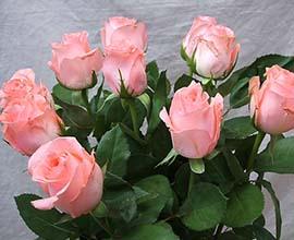 Noblesse Rose Flowers