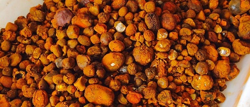 Dried Ox/cow Gallstones (71800)