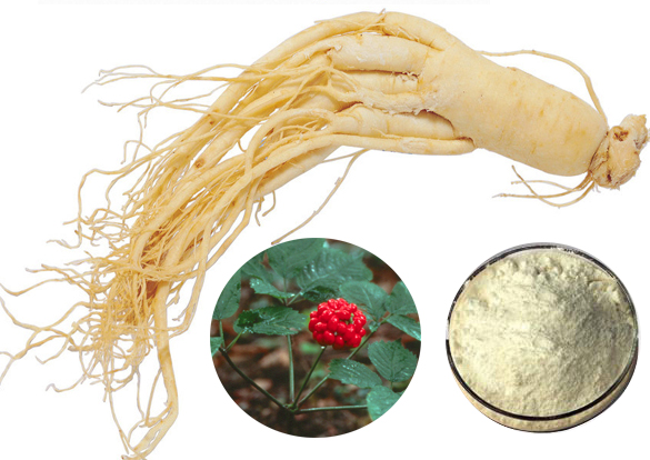 Panax Ginseng Extract Manufacturer in changsha China by Changsha ...