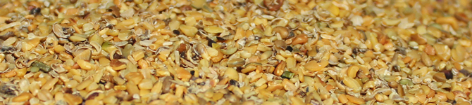 Roasted Guar Korma Manufacturer in Province South Africa by Unified Group Import And Export