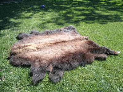 Buffalo Hides