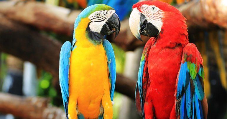 Parrots & Parrot Eggs