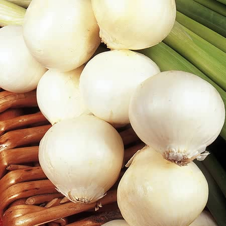 Silverskin Onion