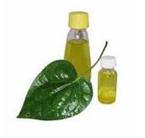 Betel Leaf Oil (SC012)