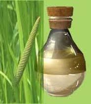 Calamus Oil (SC129)