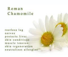 Chamomile Oil- Roman (SC019)