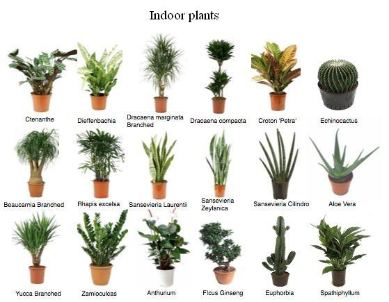 Buy Indoor Plants From Nanjil Nursery Nagercoil India