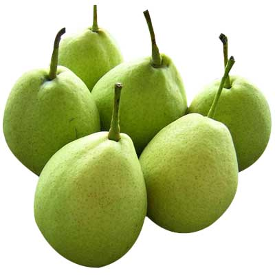 Fresh Pears ( Fresh Pears)