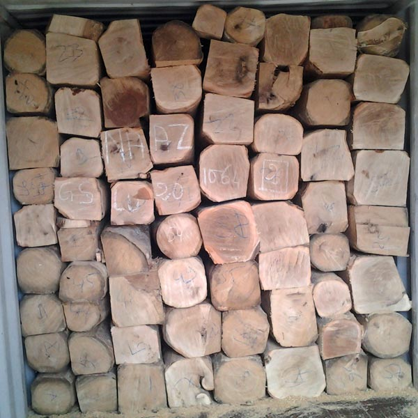 Gmelina Wood Log Manufacturer In Durgapur West Bengal India By