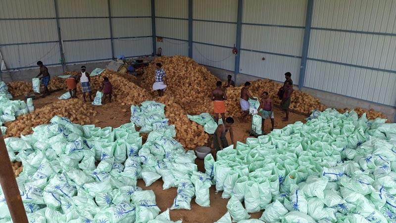Farm Fresh Semi Husked Coconut