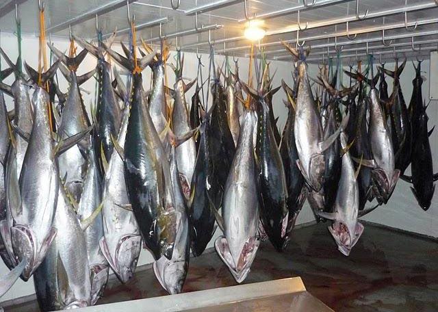 Fresh Tuna (Tuna)