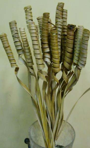 Decorative Dried Leaves