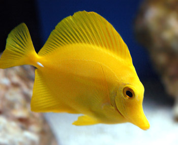 Aquarium Fishes At Lowest Price In Delhi Manufacturer In Delhi India