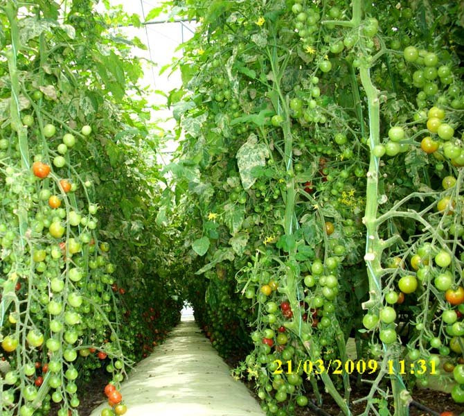 hydroponics the evolution of gardening This article is sponsored by general hydroponics, the leading innovator in the field of hydroponics for more than 35 years hydroponics is a method of growing plants without the use of soil the.