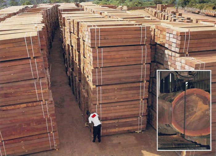 Azobe Wood Manufacturer In Cameroon By Marc Trading Ltd