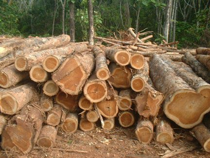 Teak Wood Manufacturer In Cameroon By Marc Trading Ltd Id