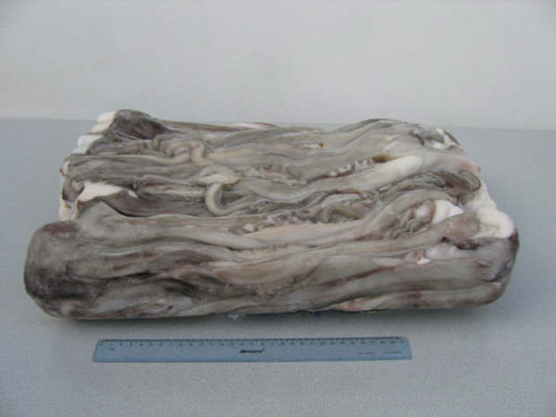 giant squid tentacles manufacturer in brampton canada by