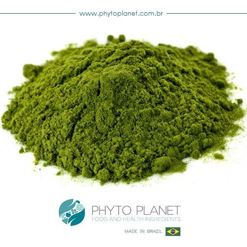 Spinach Powder Manufacturer In Brazil By Phyto Planet