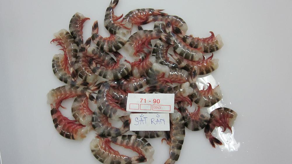Cat Tiger Shrimps
