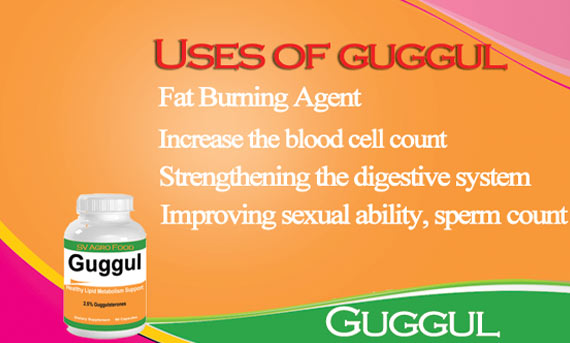 Use of Guggulu Capsule Manufacturer & Exporters from, India