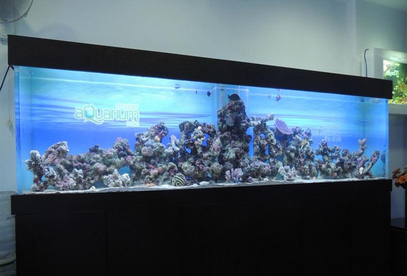 Marine aquarium manufacturer manufacturer from india for Marina aquarium