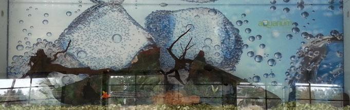 Wall Mounted Aquarium (D001)