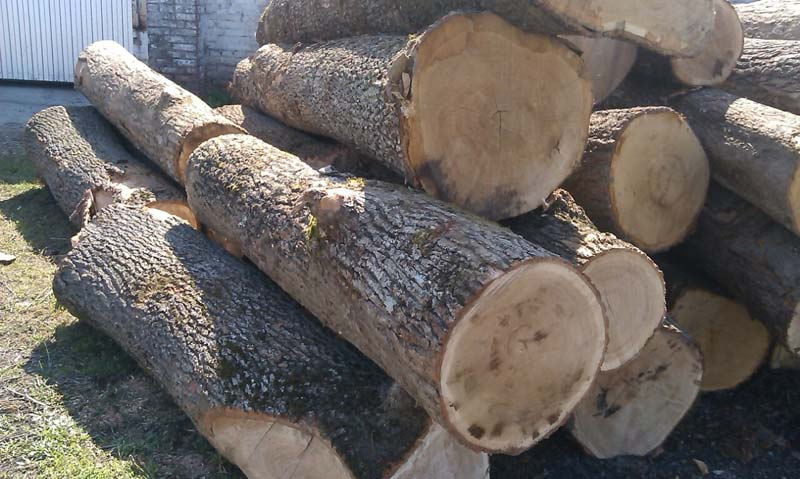 White Oak Wood Logs Manufacturer in Toronto Canada by GLO-ENT WORLDWIDE RESOURCES INC | ID - 970539