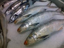 Fresh Seer Fish Manufacturer in West Bengal India by Fish-n