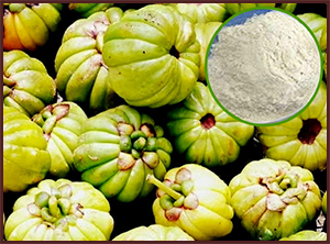 Buy Garcinia Cambogia Extract From Plantae Extracts Pvt Ltd