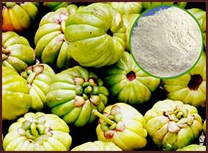 garcinia cambogia fruit available in hyderabad
