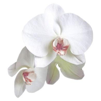 Classic Orchid Die-cut Sticker