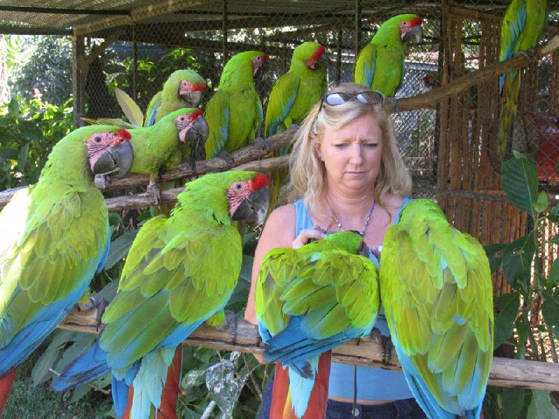 Well Tamed Macaw Parrots