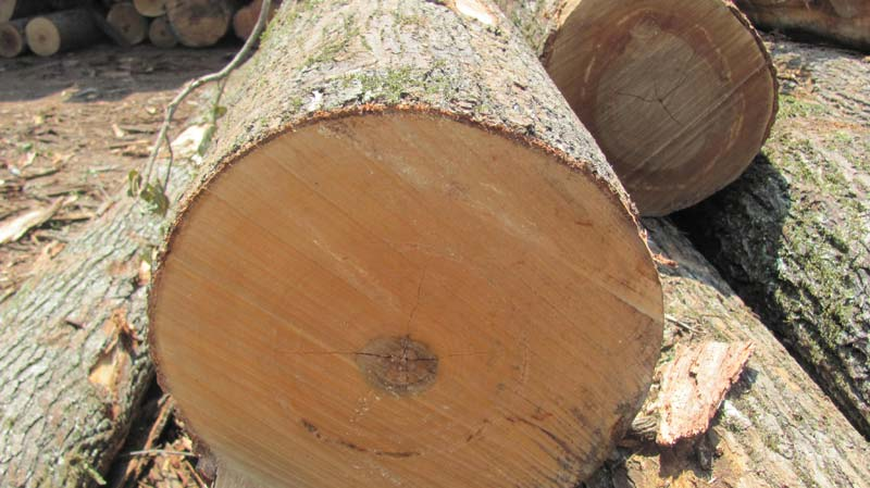 Sweetgum Manufacturer In United States By Contract