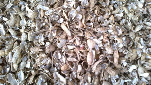 Groundnut Shells