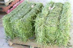 Buy high quality alfalfa hay for sale from Pavati Trading, Western Cape