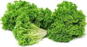 Lollo Bionda Lettuce