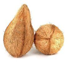 Whole Pulp Matured Semi Husked Coconuts