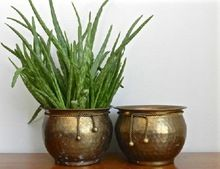 Brass Plan Planter
