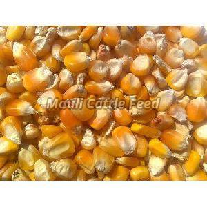 Organic Yellow Maize Cattle Feed
