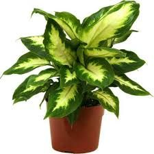 Indoor Ornamental Plants