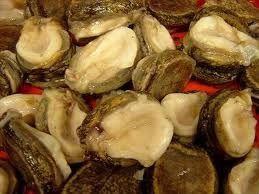 Loco Chilean Abalone