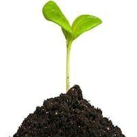 Mycorrhizal Biofertilizer