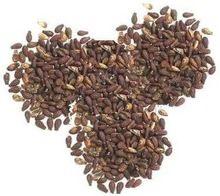 shivlingi seed