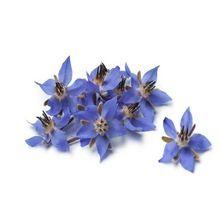 Borage Seed Aromatherapy Oil