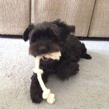 Natural Fiber Rope Dog Toy