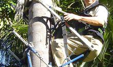 Multi Tree Climber