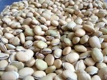 Indian Dried Field Bean
