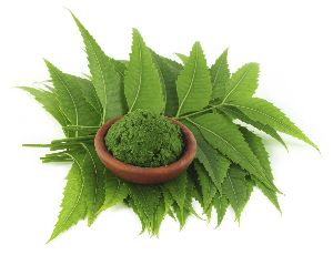 Fresh Organic Neem Leaves And Powder